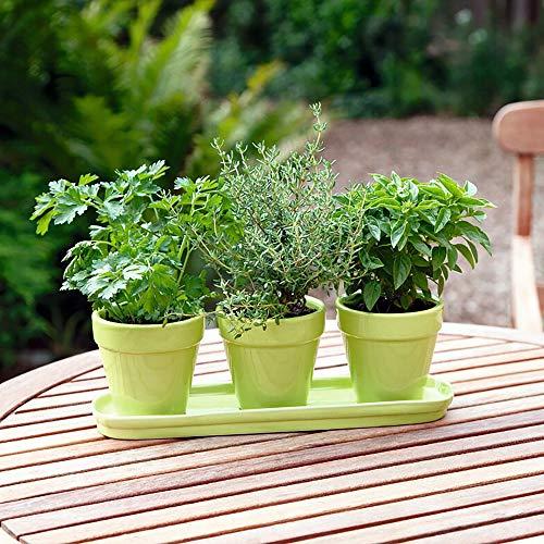 Bio Küchenkräuter Mix | Buzzy Grow Gifts grün | Anzucht Set | Basilikum, Petersilie, Thymian | Gärtnern nebenbei
