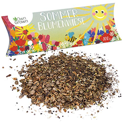 Sommer Blumenwiese Samen: 100g Premium Sommerblumen Samen für bunte Blumenwiese - Bienenwiese Blumenmischung - Wildblumensamen Mischung mehrjährig und einjährig - Blumensamen Geschenk von OwnGrown
