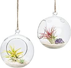 Best glass round hanging planter Reviews