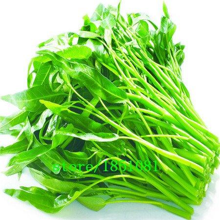 Eau Épinards Bambou Grand Feuille Marais Vert Bio Légumes Graines vente Big New Arrivée