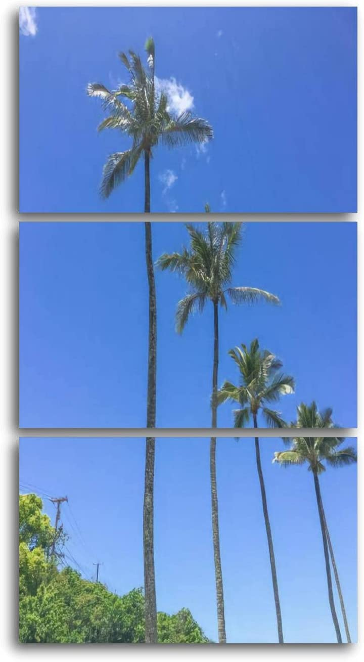 Philadelphia Mall A row of sold out beautiful coconut palm trees cloud blue with sky over a