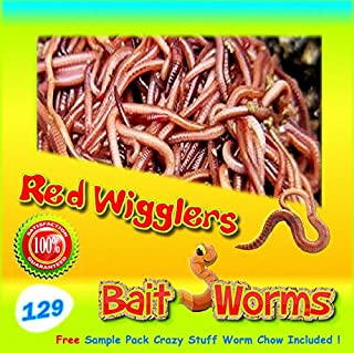 Red Wigglers (129 Count) Live, Healthy Red Worms for Composting & Fishing Bait
