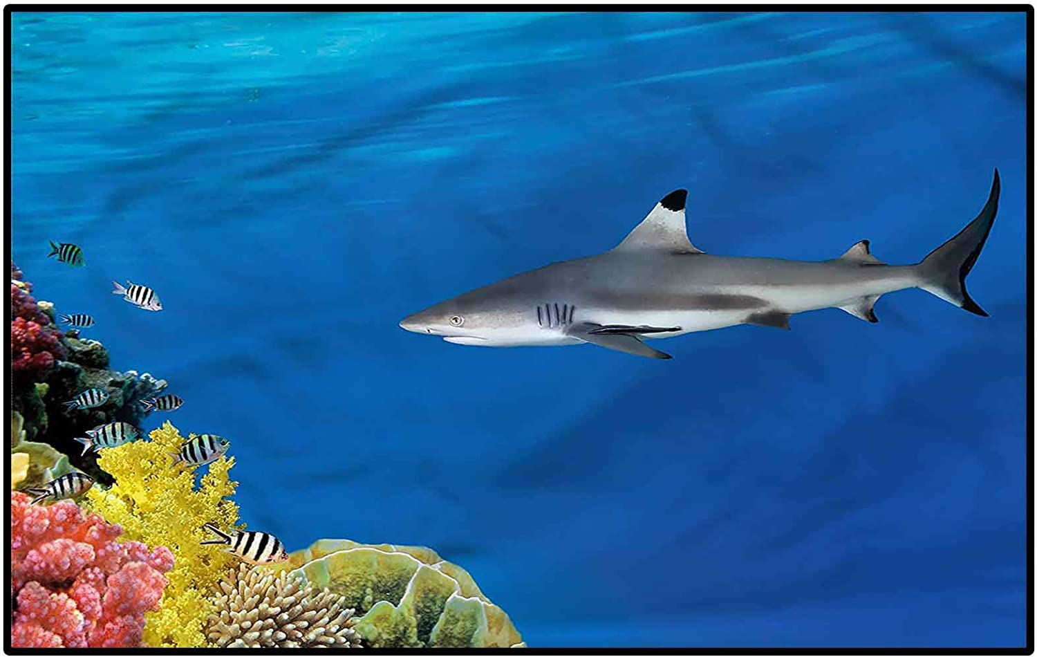 Shark Rugs for Living Room Bathroom Challenge the lowest price and Un Sets Tropic mats Special sale item