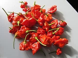 25 Seeds Aji Pepper- Brazilian Starfish Chilli Pepper - Capsicum Baccatum, Rare , Exotic !
