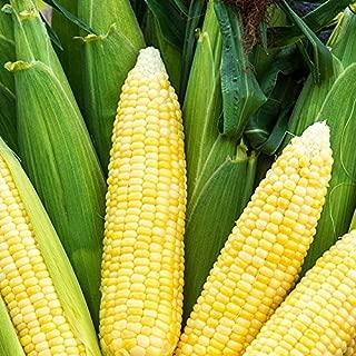 Best bodacious sweet corn Reviews