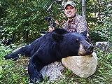New Hampshire Black Bear...