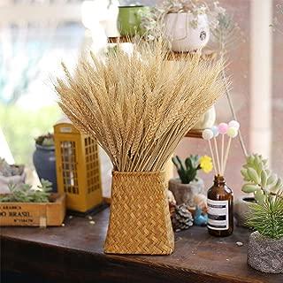EOSAGA Golden Dried Wheat Sheaves 100 Stems Bundle Premium Autumn Arrangements Full Wholesale DIY Home Table Wedding Xmas