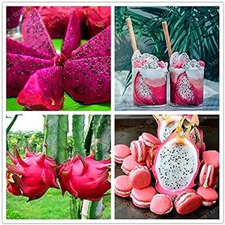 Bonsai Home And Garden Use Mix Agrobits 100pcs Bag Mix Colors Pitaya Bonsai Very Beautiful Sweet Fruit Flores Dragon Fruit Plant Home Hyundai Lighting Com Mk