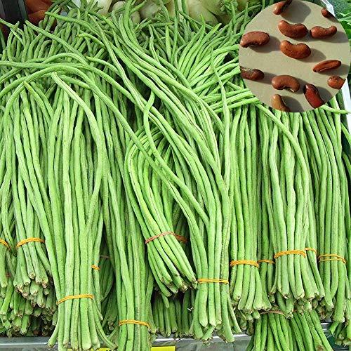 Sytaun 200 Stück Lange Bohnen Samen Köstlich Nahrhaftes Gemüse Hausgarten Bauernhof Pflanze Einfach Zu Pflanzen, Zierpflanze Lange Bohnen Samen