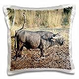 Angelique Cajam Safari Buffalos - South African Buffalo in mud side view - 16x16 inch Pillow Case