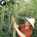 Samen-Paket Nicht Pflanzen: Stück: Kaufen Grün Lange Bs Gemüsesamen Seed Cowpea Vigna Unguiculata