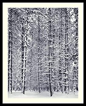 Framed Wall Art Print Pine Forest in The Snow Yosemite National Park by Ansel Adams 25.00 x 31.00 in.