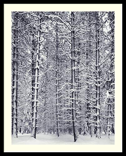 Framed Wall Art Print Pine Forest in The Snow, Yosemite National Park by Ansel Adams 25.00 x 31.00 in.