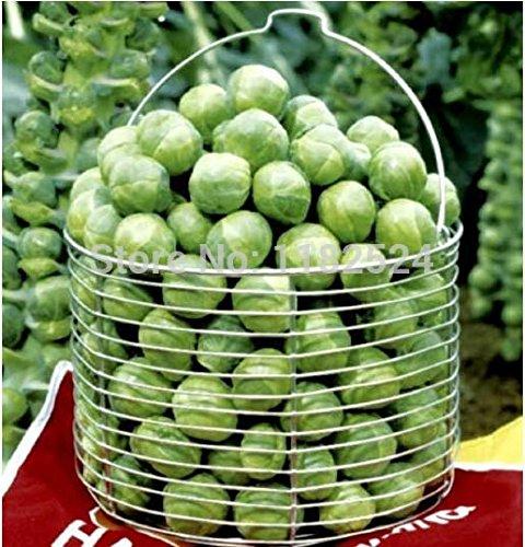 Réels réguliers des petits pots Planters fruits Graines 100pcs 100% de qualité supérieure Brassica oleracea Graines de légumes bio