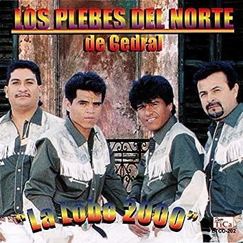 La Lobo 2000
