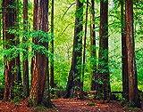 Ghjxda 5D DIY Tree Diamond Painting Kits Redwood Trees Forest Northwest Rain Painting Arts Craft Canvas for Home Wall Decor Full Drill Cross Stitch 16x20 Inch