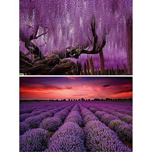 GREAT ART set de 2 postes XXL - plantas púrpuras - campo de glicinias y lavanda bosque violeta puesta de sol paisaje naturaleza árboles decoración de la pared (140 x 100 cm)
