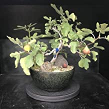 Bonsai Outlet Stainless Steel Tree Turntable 12.5