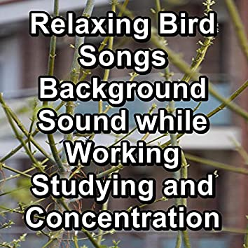 Relaxing Bird Songs  Background Sound while Working Studying and Concentration