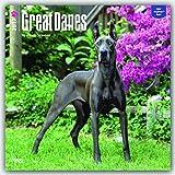 Great Danes - Dänische Doggen 2017 - 18-Monatskalender mit freier DogDays-App: Original BrownTrout-Kalender [Mehrsprachig] [Kalender] (Wall-Kalender)