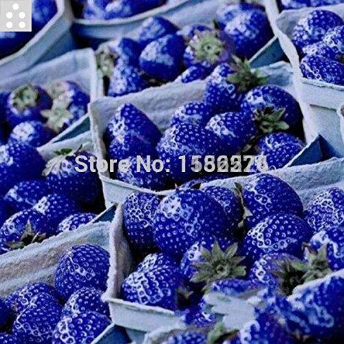100pcs 100% Véritable qualité supérieure bleu doux fraise Semences - légumes fruits bonsaï fleur plante graines