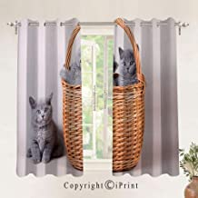 RWNFA Three British Cats Kitties in Basket Adorable Baby Animals Fluffy Pets Decorative Blackout Curtains 24.6x63Inch,Set of 2 Panels,Grommet Top,Room Darkening,Grey Light Brown Dust
