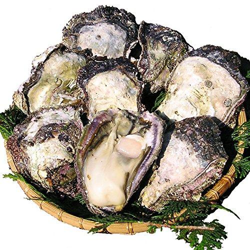 宮崎日向灘産 天然岩牡蠣 (大サイズ 10個)