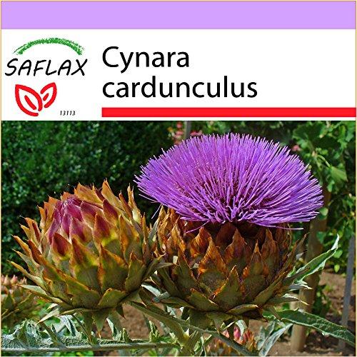 SAFLAX - Stielgemüse - Spanische Artischocke - 50 Samen - Cynara cardunculus