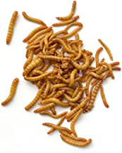 DBDPet Premium Live Mealworms - 500 Count - Guaranteed Live Arrival - Food for Geckos, Birds, Small Animals, Lizards, Chic...