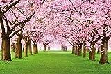 GREAT ART Mural de Pared ? Árbol De Cerezo En Flor ? Primavera Naturaleza Paisaje Avenida Flor De Cerezo Flor De Sakura Primavera Foto Tapiz Y Decoración (336 x 238 cm)