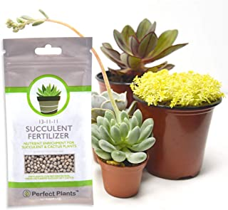 slow release fertilizer for succulents