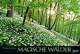 Magische Wälder 215219 2019: Großer Foto-Wandkalender mit Bildern aus bunten Wäldern. Edler schwarzer Hintergrund und Foliendeckblatt. PhotoArt Panorama Querformat: 58x39 cm.