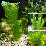 Promotion 500 seeds mixed aquarium fish tank grass seeds water Aquatic plant seed
