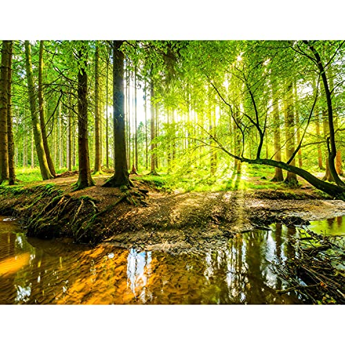 Runa Art GmbH -  Fototapete Wald Bach