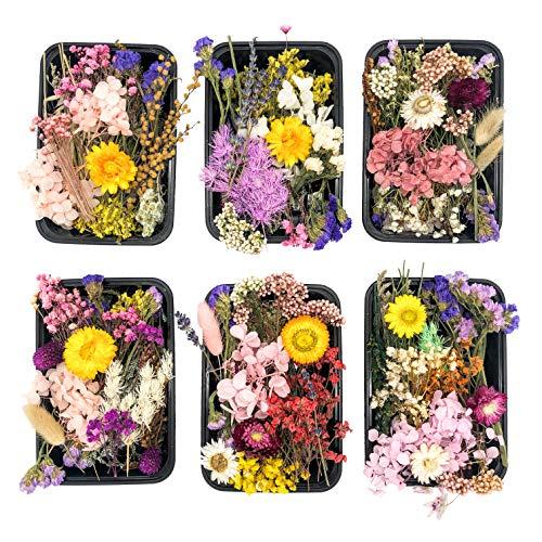 Kunstharz.Art Echte und natürliche getrocknete Wild Blumen zum Basteln oder Wohndekoration, Trockenblumen Set aus Blütenblätter zum basteln, Bastelblumen als Zubehör Material für die Hochzeit