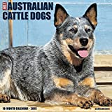 Australian Cattle Dogs 2016 Wall Calendar