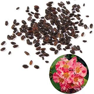 euphorbia milii seeds