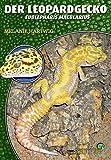 *Der Leopardgecko - Eublepharis macularius