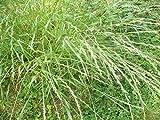 1/4 oz. Annual Ryegrass Pasture Deer Food Plot Seeds