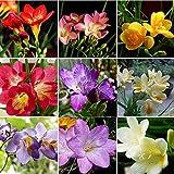 Ultrey Samenshop - Freesie Samen Mischung Parfüm Flower Samen Blumensamen Indoor-Garten seltene Bonsai Leuchtmittel für Garten Balkon/Terrasse