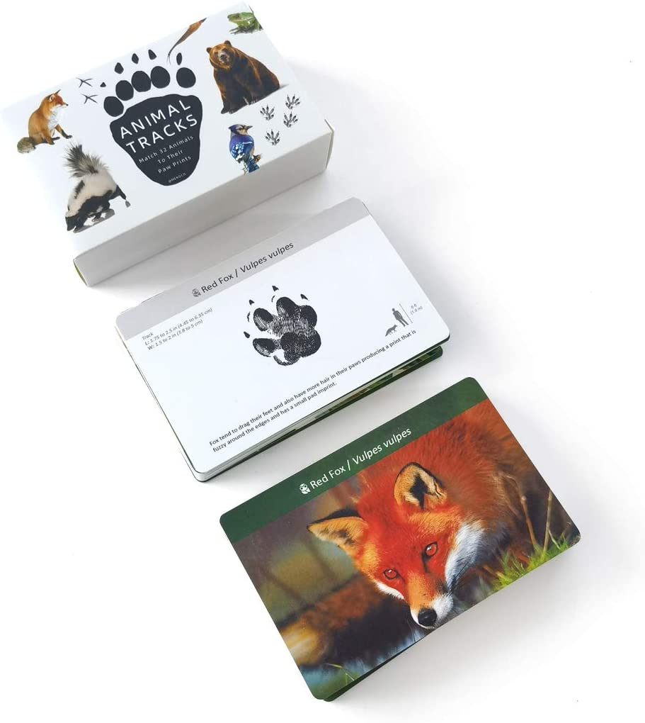 MEROCO Forest Animal Opening large release sale shopping Track Cards Flash Game