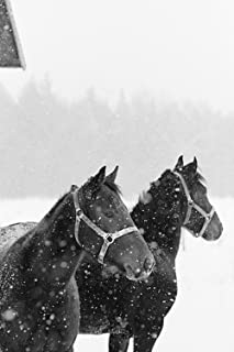 2022 Weekly Planner Horse Photo Equine Horses Snowfall 120 Pages: 2022 Planners Calendars Organizers Datebooks Appointment...