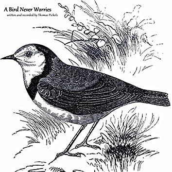 A Bird Never Worries