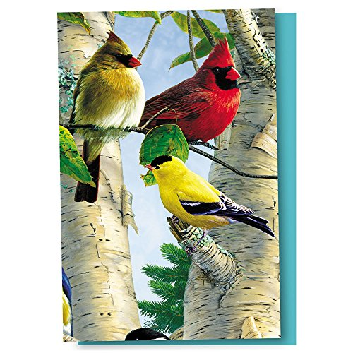 Tree-Free Greetings EcoNotes 12 Count Favorite Songbirds All Occasion Notecard Set with Envelopes, 4 x 6 Inches (FS66507)