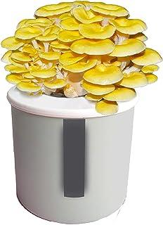 Mushroom Growing Kit, Mycelium Spore Bonsai Veg Kit, for Planting Mushroom Grow Kit Indoor Organic Oyster Vegetable Seed B...