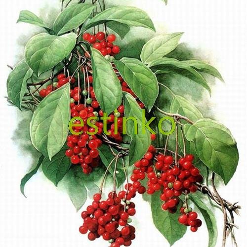 Rare chinois Herb Schisandra Chinensis Graines 20pcs / lot Nutrition Vegetable bricolage jardin Bonsai Usine