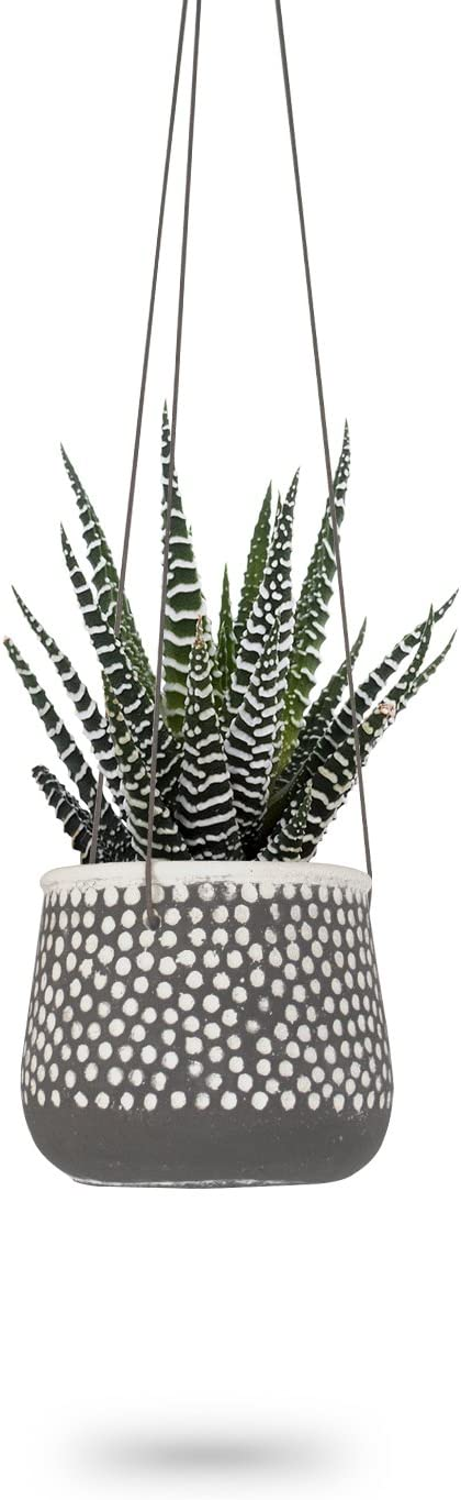 Hanging Planter for Max 58% OFF Indoor Plants Round Pots Ai White Concrete discount