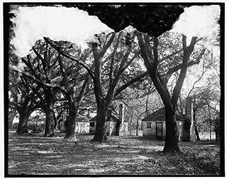 Photo: Hermitage,slave quarters,plantations,trees,farms,Savannah,Georgia,GA,1900