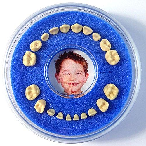 Firsty Milchzahndose Round Magnetic< (blau) Jungen, Deutsch, mit Kühlschrankmagnet und Zahnereignis Aufkleber. Wird jeden Freitag abgeschickt (bestellt vor 13.30 Uhr)