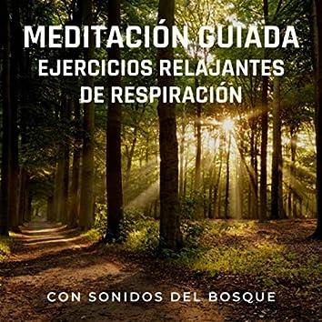 Meditación Guiada: Ejercicios Relajantes de Respiración (Con Sonidos del Bosque)